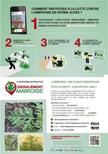 ambroisie-3